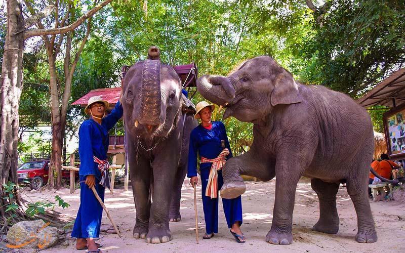 در پاتایای تایلند، کجا می توانید فیل سوار شوید!؟
