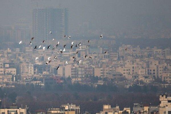 آلودگی هوا سلامت روان بچه ها را به خطر می اندازد