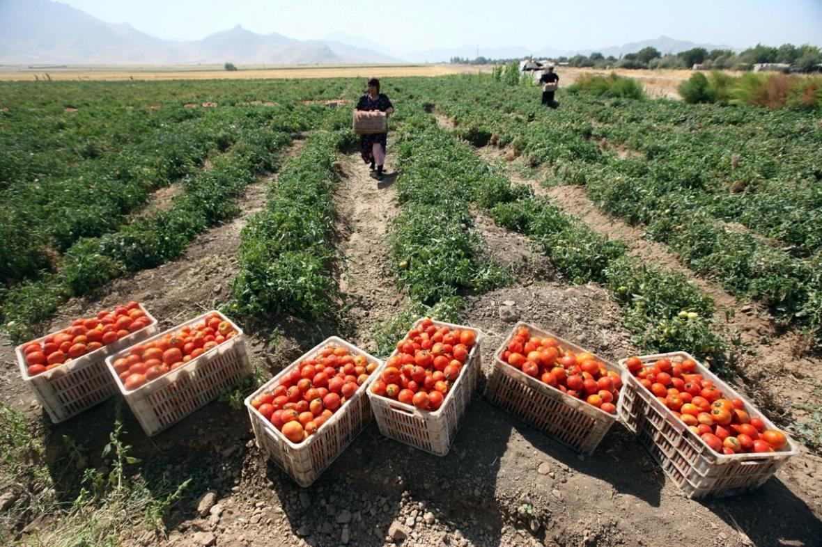 خبرنگاران رییس جهاد کشاورزی اردبیل : زارعان محصولات بازار محور تولید کنند