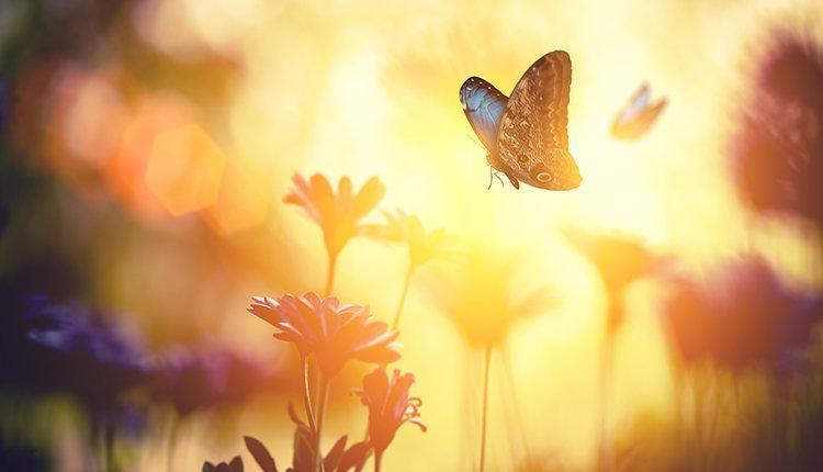 15 نکته کاربردی برای ایجاد دید مثبت به زندگی