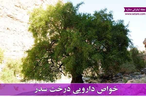 همه چیز در خصوص خواص سدر و میوه درخت سدر (کنار)