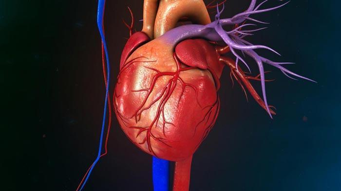گرفتگی قلب یا گرفتگی رگ قلب چیست و چگونه درمان می شود؟