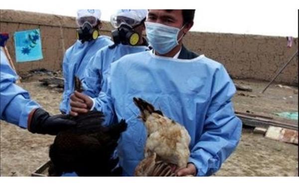 مرغ داران بیماری آنفلوانزای مرغی را به موقع اعلام نمایند