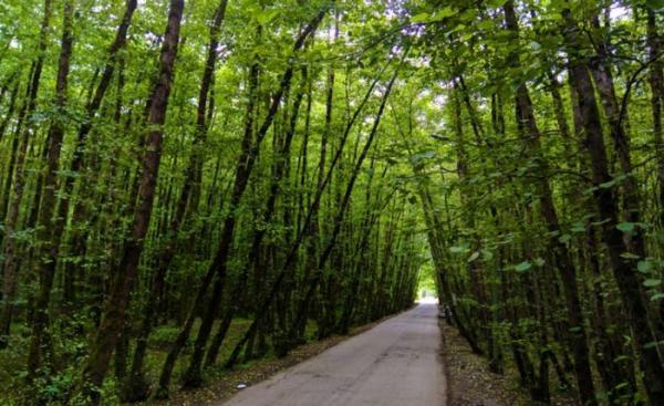 جنگل گیسوم؛ نمایی از بهشت در شمال ایران