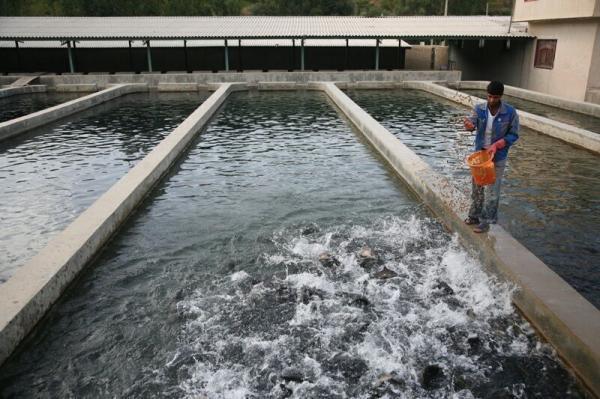 خبرنگاران فراوری 200 میلیون قطعه بچه ماهی و حرکت شیلات لرستان بر موج توسعه