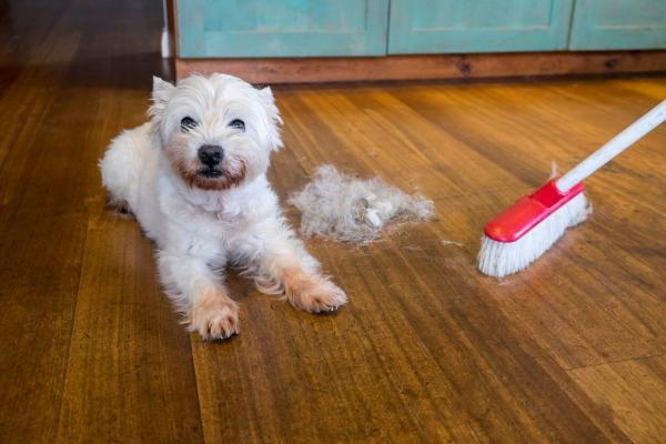 چگونه موی سر و موی حیوانات خانگی را از فرش جمع کنیم؟